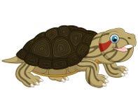 De leuke schildpad van de beeldverhaalbaby Stock Foto's