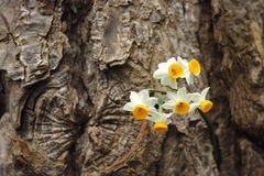 Wilde bloemen op een schors Stock Afbeeldingen