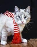 De leuke witte kat in gestreepte sjaal beweegt zich door en bekijkt u stock foto's