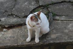 De leuke witte kat zit het rusten stock fotografie