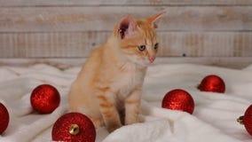 De leuke zitting van de gemberkat onder de rode decoratie van de Kerstmisbal stock video