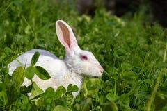 De leuke zitting van het konijntjeskonijn op groen gras in tuin stock fotografie