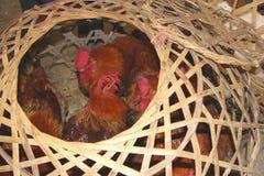 De levende kippen kunnen een uitbarsting van Sars, H7N9, H5N8 en H5N1 virussen in China, Azië, Europa en de V.S. veroorzaken Stock Foto's