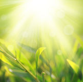 De lichte achtergrond van de lente Royalty-vrije Stock Foto