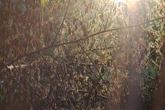 De lichte avondschaduw verlaat droge textuur Stock Foto's