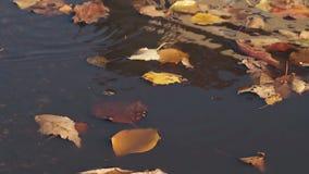 De lichte wind blaast droge bladeren en zij vallen op regenwater stock videobeelden