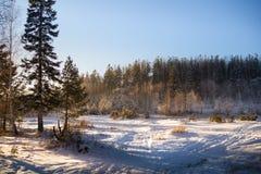 De lichten blauwe geel van de de winter boszonsondergang Royalty-vrije Stock Afbeeldingen