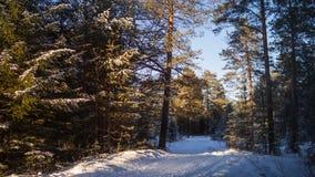 De lichten blauwe geel van de de winter boszonsondergang Royalty-vrije Stock Afbeelding