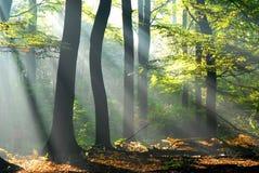De lichten gieten door de bomen Royalty-vrije Stock Fotografie