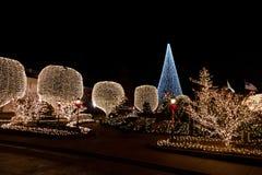 De lichten van de decoratie op bomen bij nacht Royalty-vrije Stock Foto's