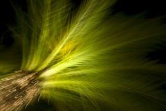 De Lichten van de palm stock foto
