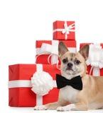 De lichtgeele hond ligt dichtbij Kerstmis voorstelt Royalty-vrije Stock Afbeeldingen