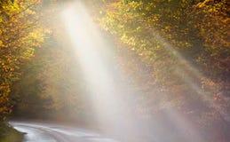 De lichtstralen tonen de manier door de herfstbomen stock foto
