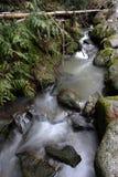 De lidmaten van de boom over een stroom. Royalty-vrije Stock Afbeelding