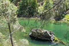 De lidmaten van de pijnboomboom voor snel stromende groene Drievuldigheidsrivier in Noordelijk Californië met binnen rots in het  stock foto