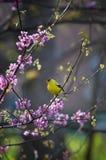 De liederen van de lente Royalty-vrije Stock Afbeelding