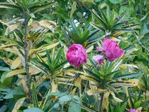 De liefde is de bloem u moet laten groeien stock foto