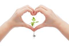 De liefde en beschermt aard en het leven Stock Foto's