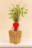 De liefde kwam tot bloei Royalty-vrije Stock Afbeeldingen