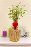 De liefde kwam tot bloei Stock Foto