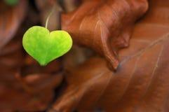 De liefde is overal Stock Foto