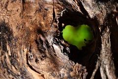 De liefde is rondom ons stock foto's