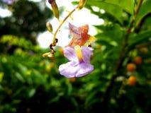 De liefde van bloemen sterft nooit Stock Foto