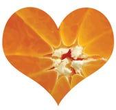 De liefde van de citrusvrucht Royalty-vrije Stock Afbeelding