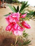 De liefde van de floraaard Stock Fotografie
