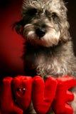 De Liefde van de hond stock afbeeldingen
