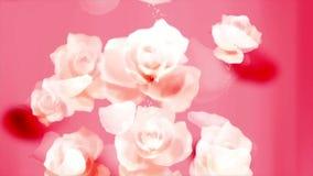 De liefdehuwelijk van de rozenbloem stock footage