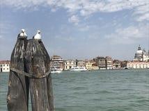 De liefdezeemeeuwen van Venetië stock afbeelding