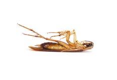 De liggende bovenkant van de kakkerlak - neer Royalty-vrije Stock Afbeeldingen