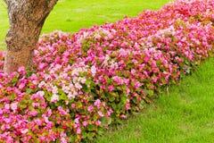 De lijn van bloemen royalty-vrije stock afbeeldingen