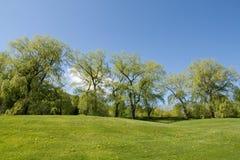 De lijn van de boom op heuvel Stock Afbeeldingen
