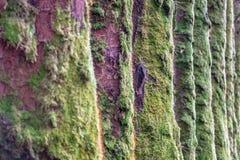De lijn van het boommos Royalty-vrije Stock Foto