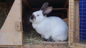 De lijn van tamme konijnen eet korrel en gras in landbouwbedrijfkonijnehok stock afbeeldingen