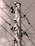 De Lijnen van de macht Stock Afbeeldingen