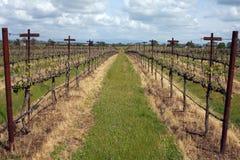De Lijnen van de wijnstok Stock Afbeelding