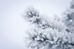 De Lijnen van de winter Stock Fotografie