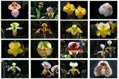 De lijst van de orchidee stock foto