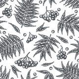 De lijsterbessen naadloos patroon van de gravureherfst Stock Afbeeldingen