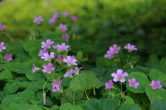 De lilla blommorna royaltyfri bild