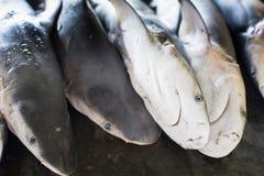 De lilla hajarna för grossist på auktiongolvet  Royaltyfria Bilder