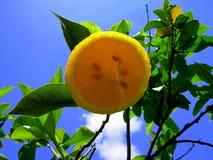 De limonade van de citroen royalty-vrije stock afbeelding