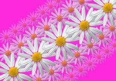 De lineaire samenstelling van bloemen Stock Foto's