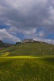 De linze die in Castelluccio Di Norcia bloeien Duizenden kleuren Stock Afbeeldingen