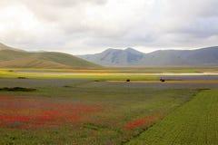 De linze die in Castelluccio Di Norcia bloeien Duizenden kleuren Royalty-vrije Stock Afbeeldingen