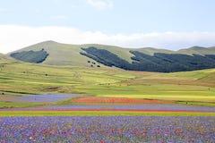 De linze die in Castelluccio Di Norcia bloeien Duizenden kleuren Royalty-vrije Stock Fotografie