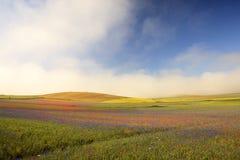 De linze die in Castelluccio Di Norcia bloeien Duizenden kleuren Stock Foto